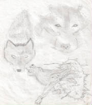 art_wolf_sketches_1.jpg